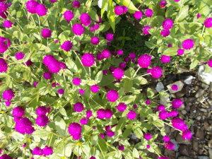 FLOWERS (FILEminimizer)